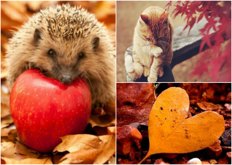 Favoriete Hello Autumn | Waarom ik zo van de herfst hou - Beautydagboek #GG48