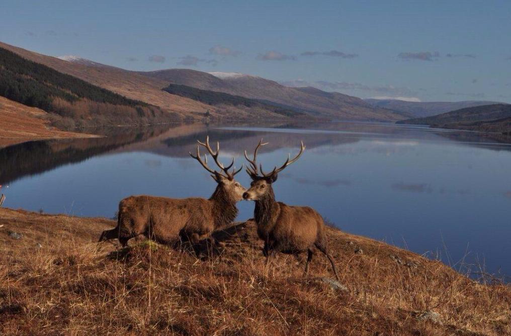 Autovakantie Schotland Highlands