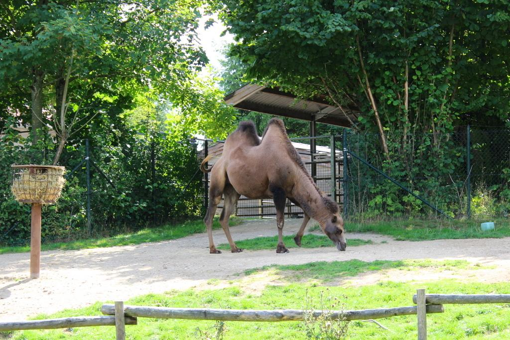 GaiaZOO dierentuin review
