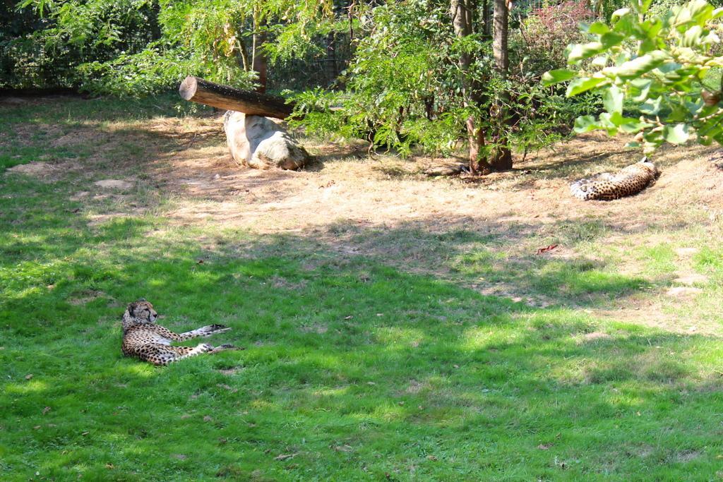 GaiaZOO dierentuin winactie